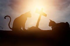 Deux chats de silhouette se tapissaient à la tombe de elle ami Photographie stock