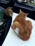 Deux chats de sommeil images libres de droits