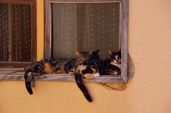 deux chats de sommeil sur le filon-couche de fenêtre Images stock
