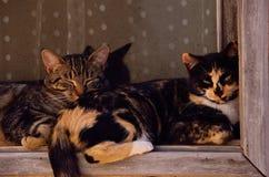 deux chats de sommeil sur le filon-couche de fenêtre Photo libre de droits
