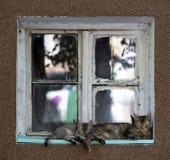 Deux chats dormant sur la fenêtre Photo libre de droits