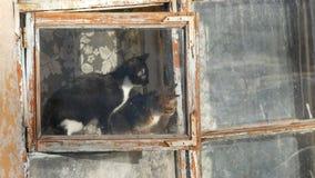 Deux chats drôles se reposent dans la fenêtre, et regarder le chat de la rue une a étiré et renifle l'odeur du ressort clips vidéos
