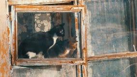 Deux chats dr?les se reposent dans la fen?tre, et regarder le chat de la rue une a ?tir? et renifle l'odeur du ressort banque de vidéos