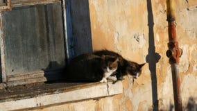 Deux chats dr?les se reposent dans une vieux fen?tre et regard de cru dehors clips vidéos