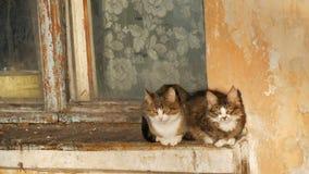 Deux chats dr?les se reposent dans une vieux fen?tre et regard de cru dehors banque de vidéos