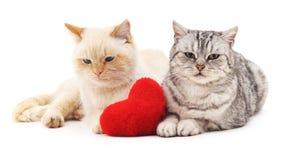 Deux chats et coeur rouge Photographie stock libre de droits