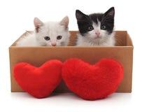 Deux chats et coeurs rouges Photographie stock libre de droits