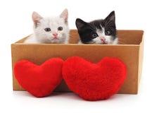 Deux chats et coeurs rouges Photo stock