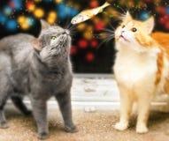 Deux chats et poissons Photographie stock