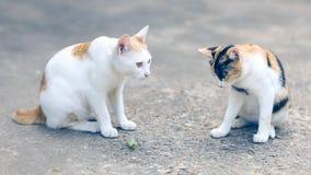 Deux chats feignant pour être petits insectes sur le plancher de ciment banque de vidéos