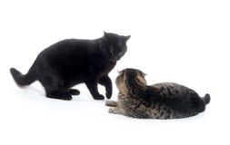 Deux chats jouant et combattant Images libres de droits