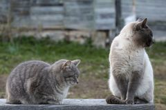 Deux chats mignons se reposent sur un banc en bois, un dort, l'autre regarde au c?t?, dans la perspective du mur photographie stock