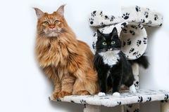 Deux chats mignons se tiennent sur une maison de jeu Photos libres de droits