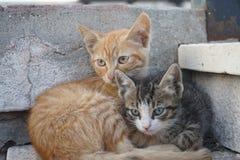 Deux chats mignons se trouvant sur des escaliers Image stock
