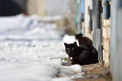 Deux chats noirs marchent dans la rue un jour d'hiver Photographie stock libre de droits