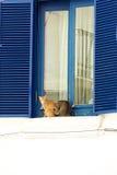 Deux chats paresseux se reposant sur le rebord de fenêtre Images stock