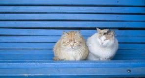 Deux chats pelucheux de rue sur un banc en bois bleu Photo stock
