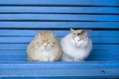 Deux chats pelucheux de rue sur un banc en bois bleu Photos libres de droits