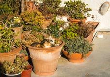 Deux chats s'étendant dans le pot de fleur Image stock