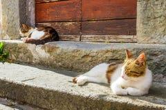 Deux chats se dorant au soleil sur le porche Photos stock