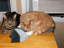 Deux chats se reposant sur une table Photos libres de droits