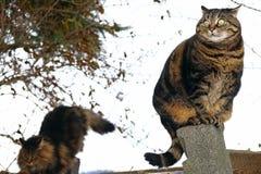 Deux chats se sont élevés sur une barrière Un chat avec un regard drôle et idiot Images libres de droits