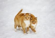 Deux chats se sont nichés entre eux extérieur à l'arrière-plan neigeux Images stock