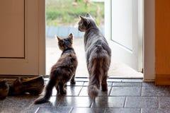 Deux chats se tiennent dans la chambre devant la porte ouverte et photographie stock
