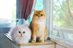 Deux chats sont des amants image libre de droits