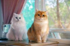 Deux chats sont des amants image stock