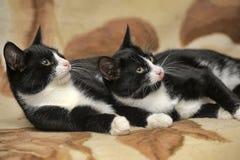 Deux chats sont des jumeaux Photo libre de droits