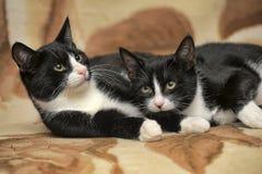 Deux chats sont des jumeaux Photographie stock