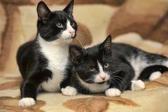 Deux chats sont des jumeaux Images libres de droits