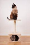 Deux chats sur l'arbre de chat Image libre de droits