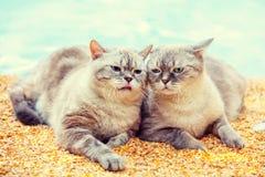 Deux chats sur la plage Photographie stock