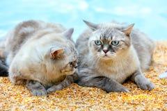 Deux chats sur la plage Photos libres de droits