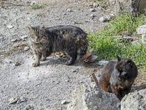 Deux chats sur la rue photographie stock