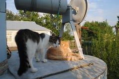 Deux chats sur le puits Photos stock