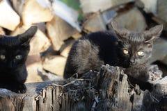Deux chats sur un rondin Image stock