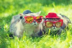 Deux chats utilisant des lunettes de soleil Photographie stock libre de droits