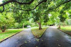 Deux chemins de divergence en parc vert luxuriant à Sydney image libre de droits