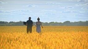 Deux chercheurs partant dans le domaine de blé Agro scientifiques travaillant dans le domaine clips vidéos