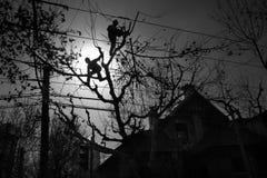 Deux chevêtres d'arbre Images libres de droits