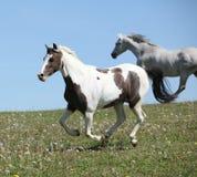 Deux chevaux étonnants fonctionnant ensemble Photographie stock libre de droits