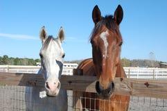 Deux chevaux Photographie stock