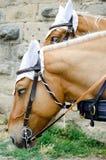 Deux chevaux Image stock