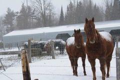 Deux chevaux ! Photos libres de droits