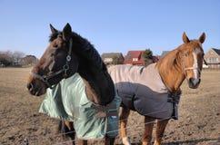 Deux chevaux Image libre de droits