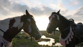 Deux chevaux assez sellés dans un support de frein sur un pré au coucher du soleil dans le mouvement lent banque de vidéos