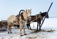 Deux chevaux au côté d'un fleuve figé Image stock